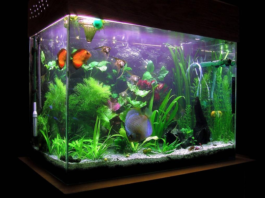 Nice Natural Design Large Fish Tanks Can Decor