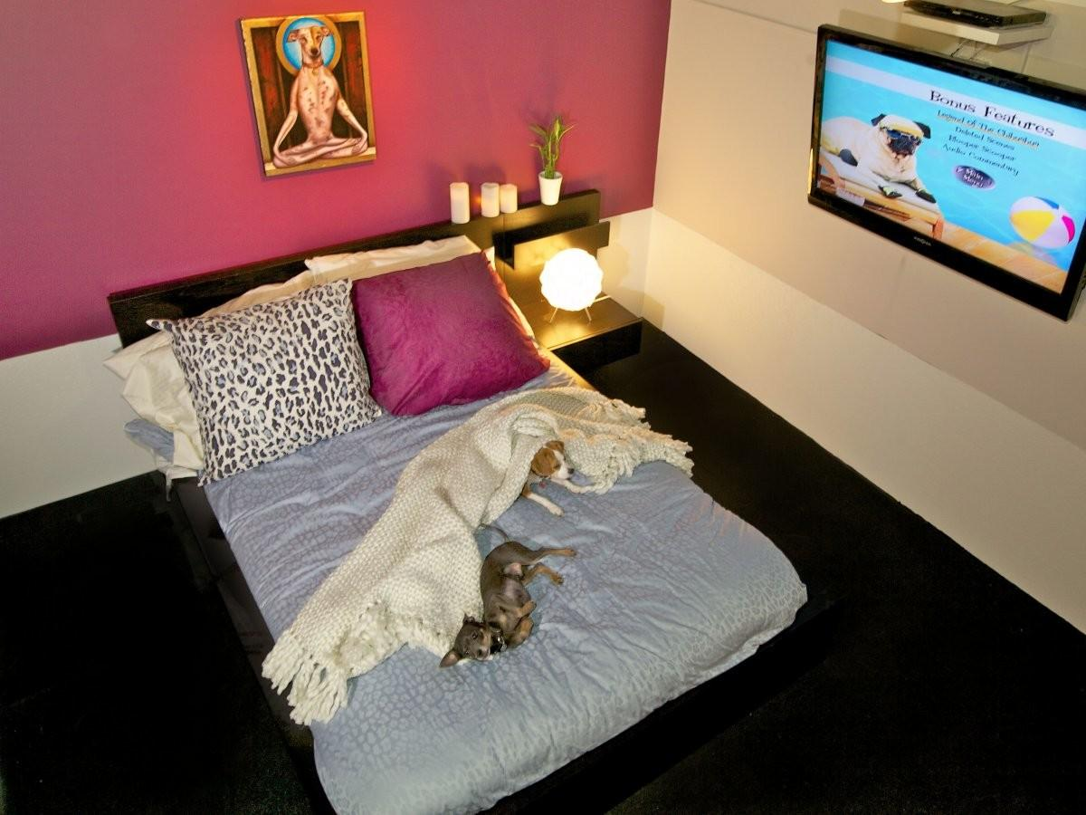 Nyc Dog Hotel Has Accommodations Your