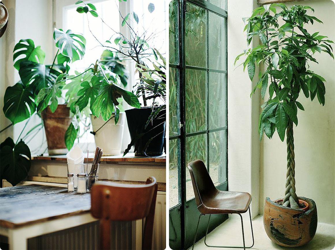 Office Desk Plants Nature Inspired Home