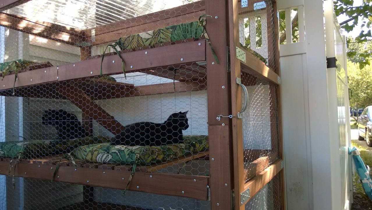 Outdoor Cat Enclosure Catio Part Cats Orbited