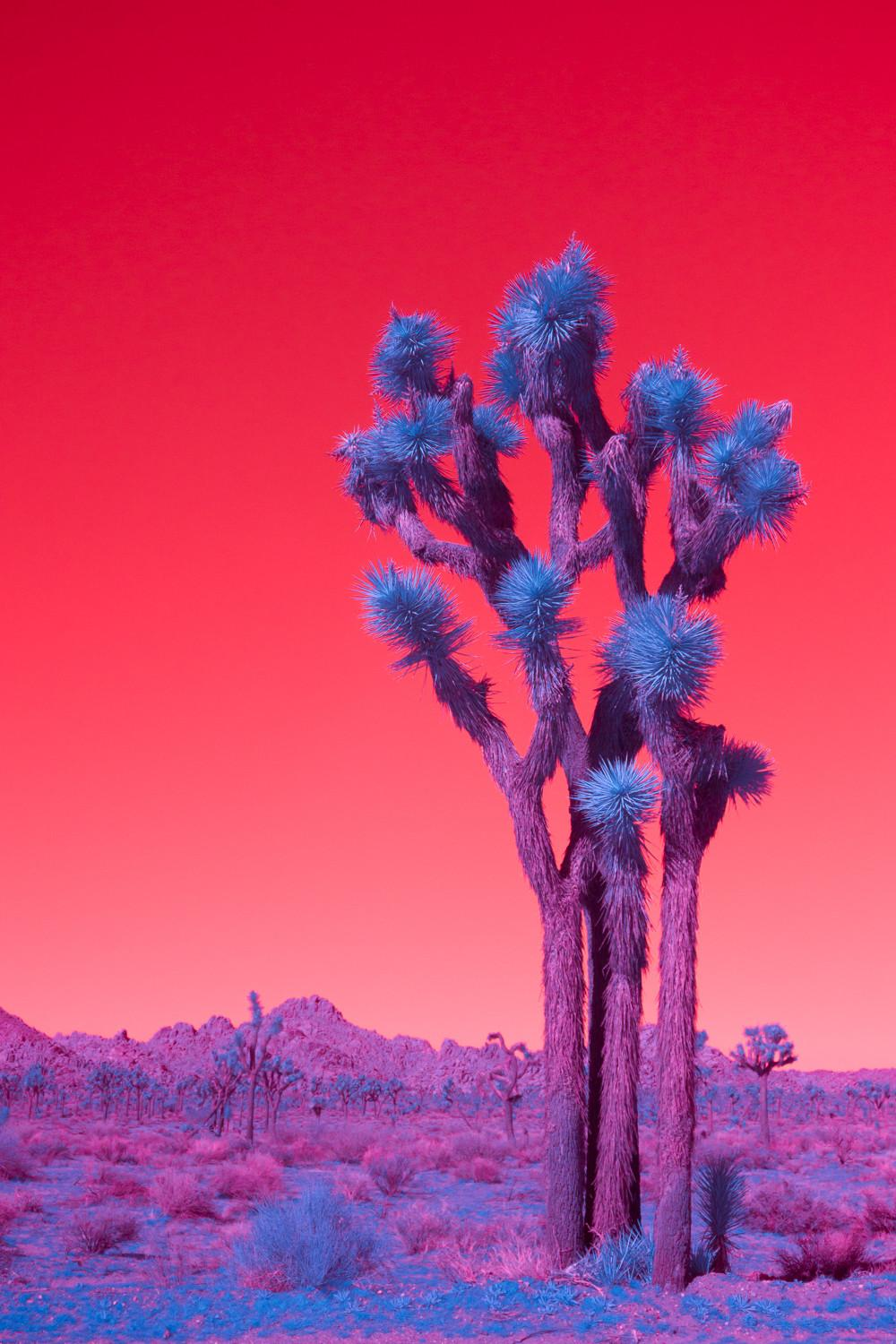 Palm Springs Infrared Amuse