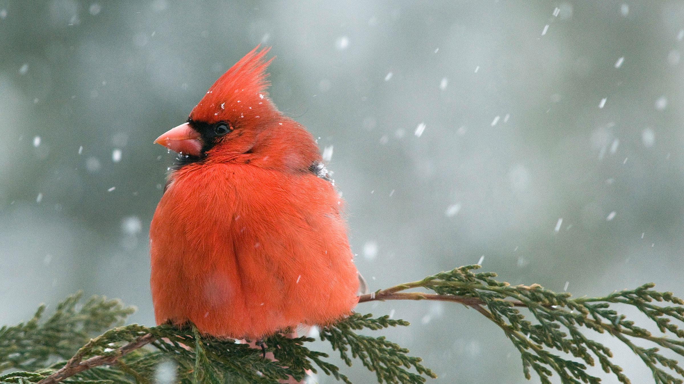 Perfect Gifts Bird Nature Lovers Your
