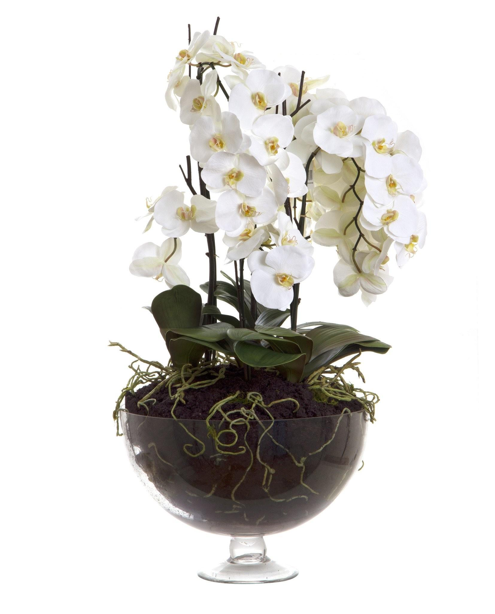 Phalaenopsis Orchid Large Glasse Vase Allissias Attic