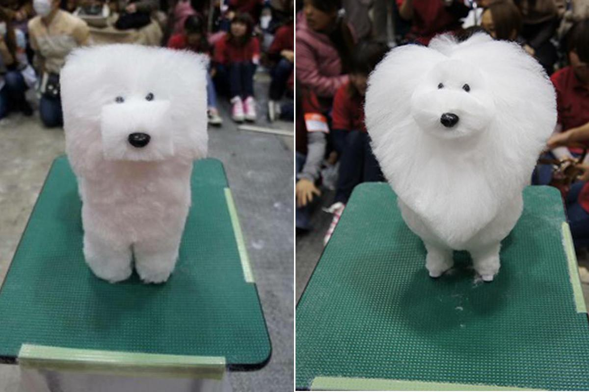 Photos New Asian Trend Shaving Dogs Into Cubes