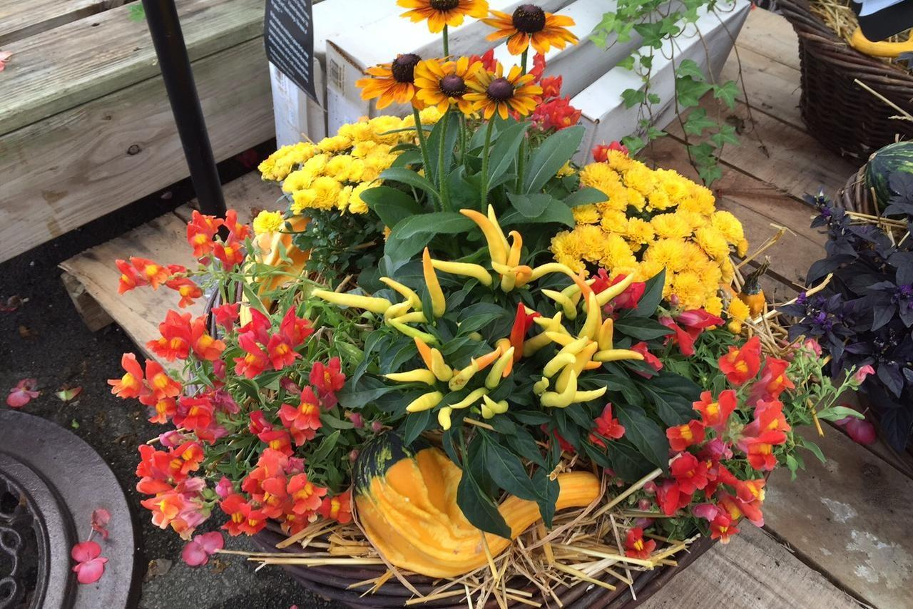 Photos Tips Ideas Colorful Fall Container Gardens