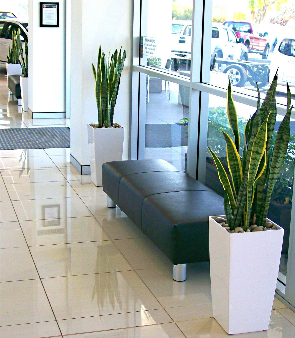 Plant Display Leaseleaves Indoor Hire Tamworth