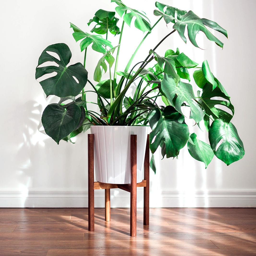 Plant Stand Midcentury Diy Awesomeant Photos