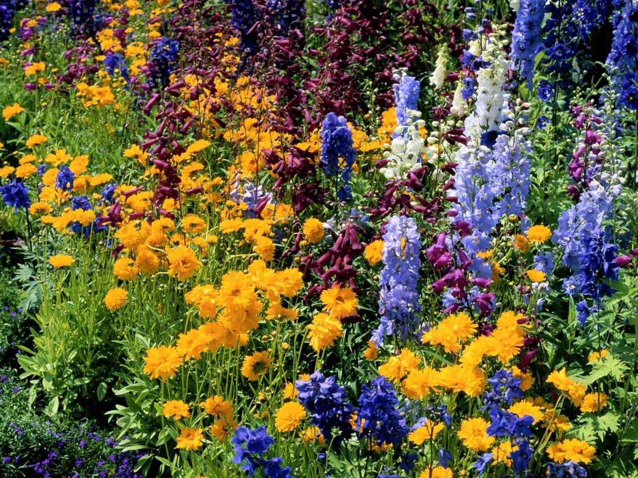 Planting Summer Flower Beds Borders