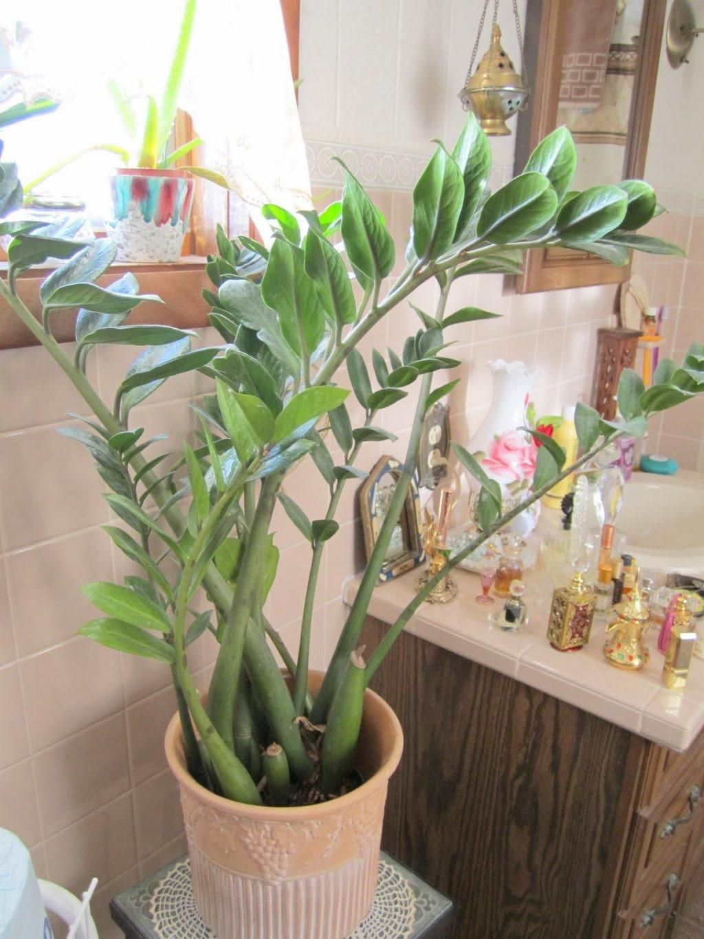 Plants Bathrooms 4804