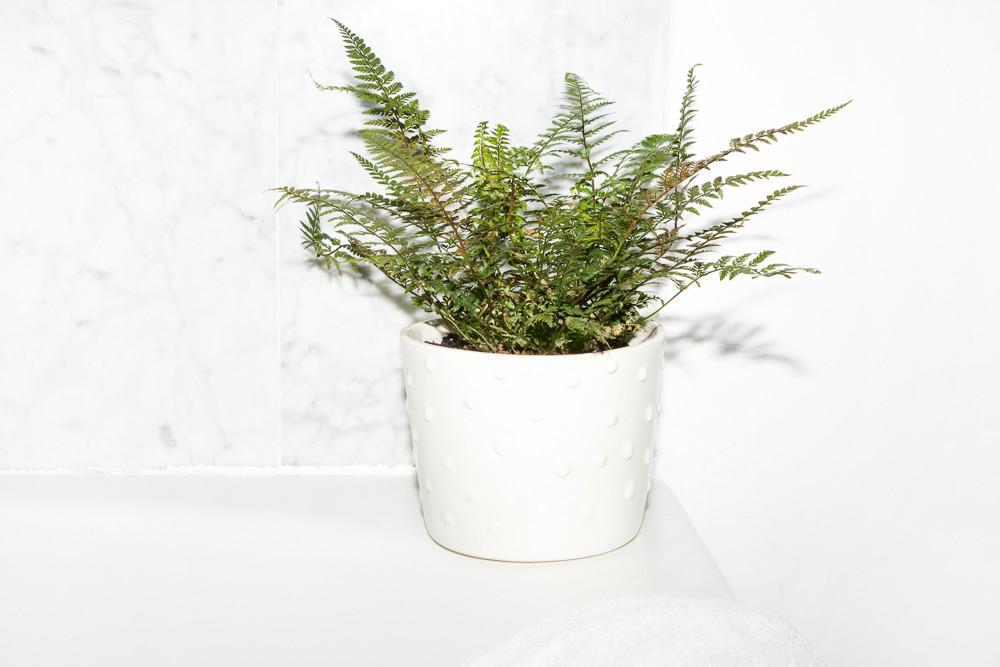 Plants Bathrooms Feel Spa Worthy Into Gloss