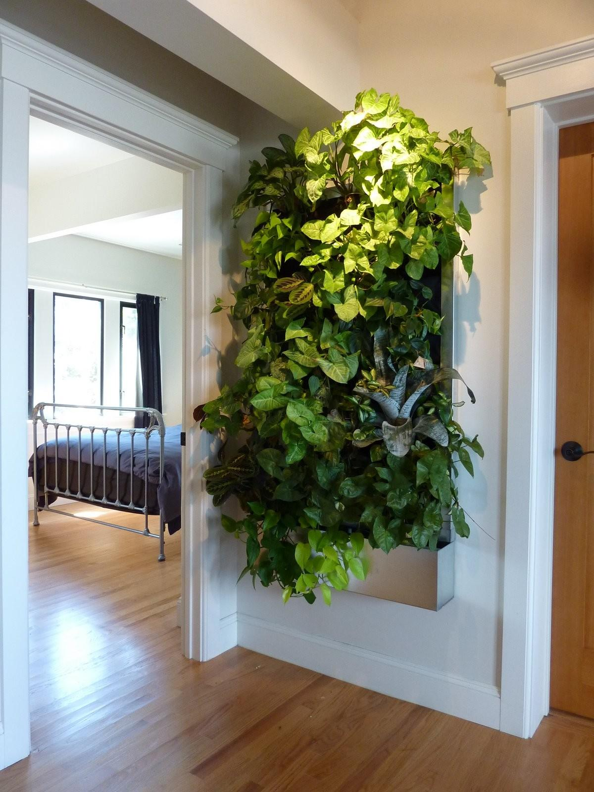 Plants Walls Vertical Garden Systems Low Light