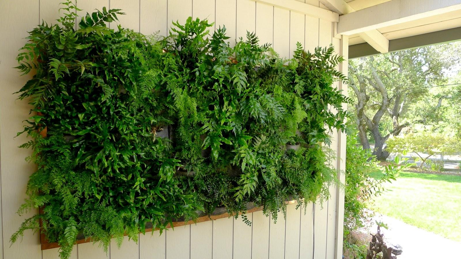 Plants Walls Vertical Garden Systems May 2012
