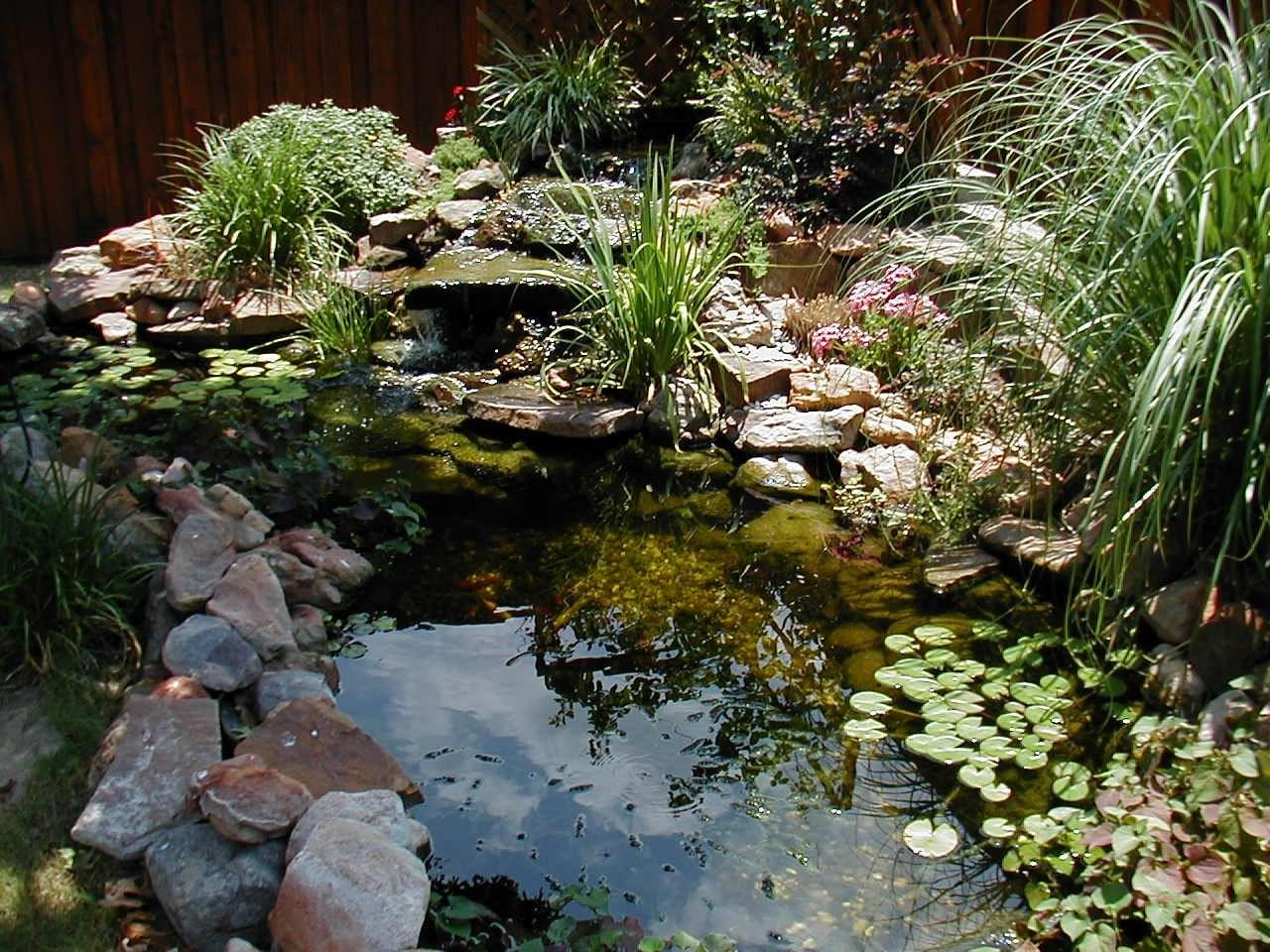Pond Landscaping Ideas Gardening