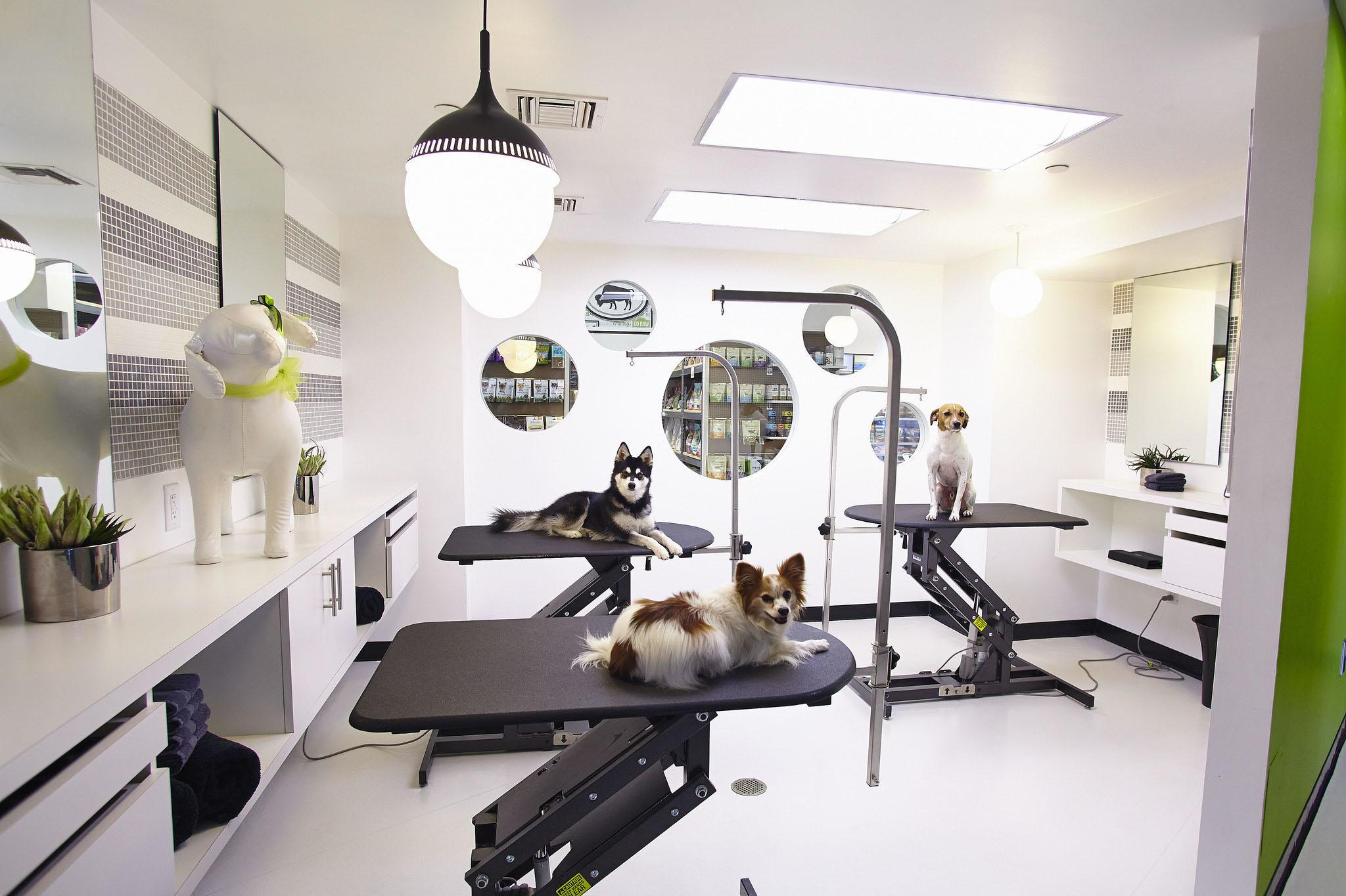 Pooch Pampering Beverly Hills Has Gone Dogs