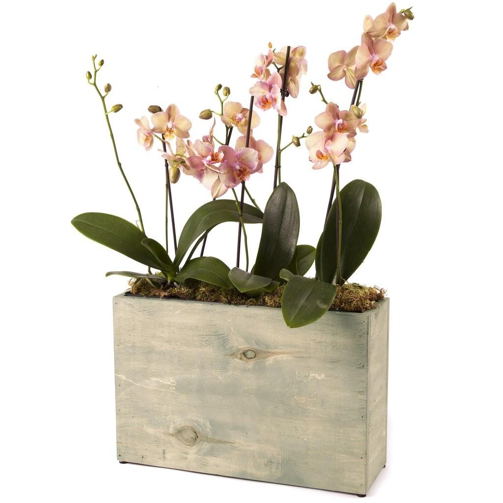 Pot Hydro Planter Weathered Grey Modernsprout