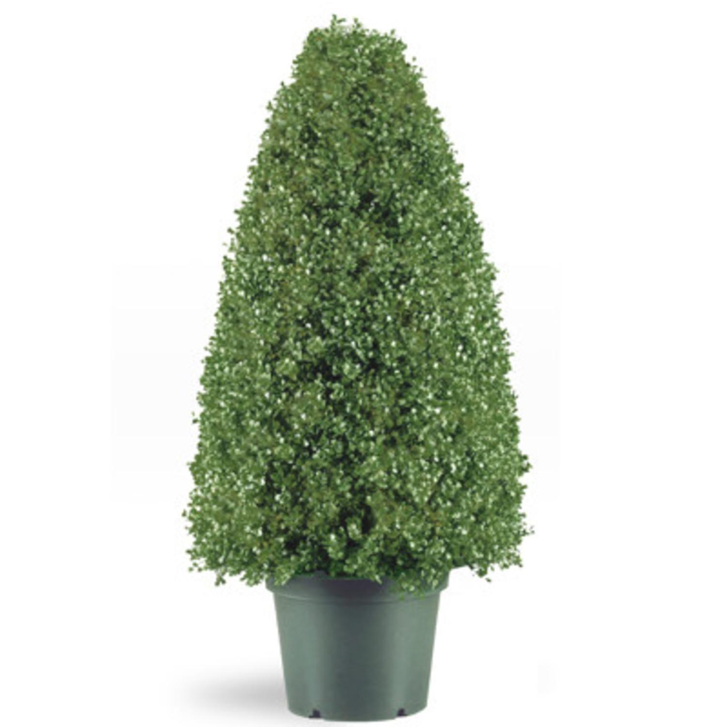 Potted Artificial Boxwood Topiary Cone Tree Jet