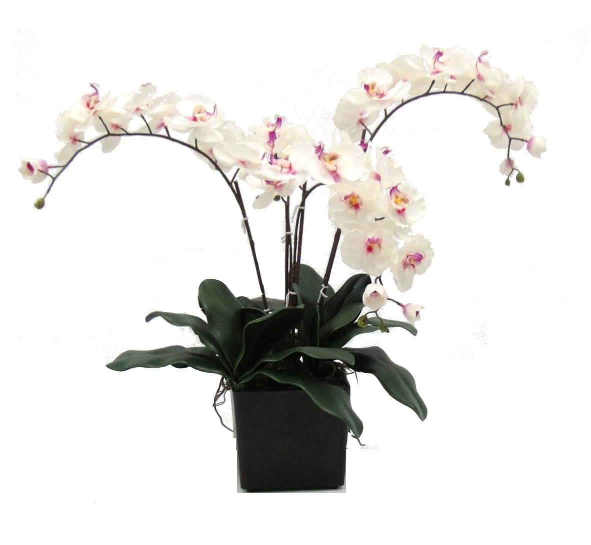 Potted Artificial Deluxe Orchid Evergreen Direct