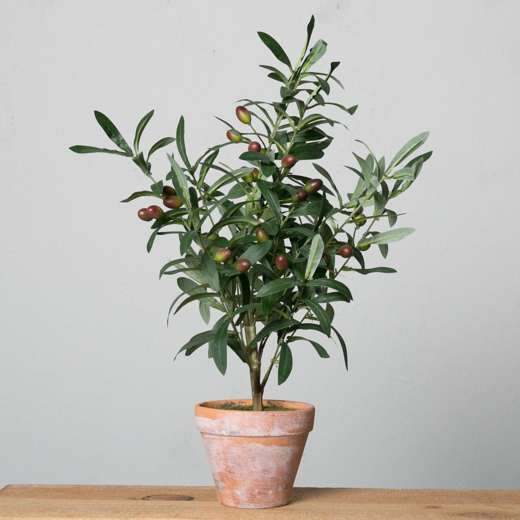 Potted Olive Topiary Magnolia Chip Joanna Gaines