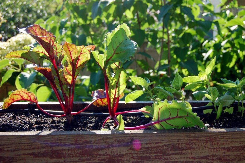Prepare Fall Vegetable Garden