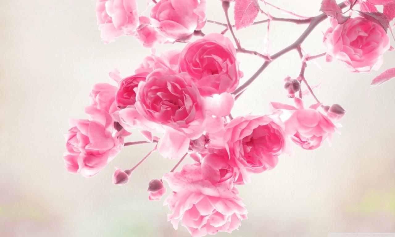 Pretty Pink Roses Color