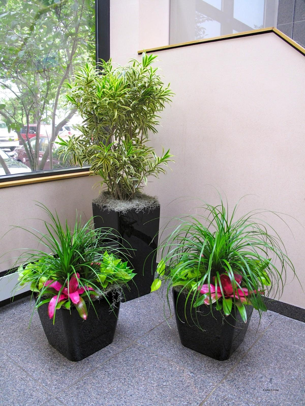 Properly Install Interior House Plants