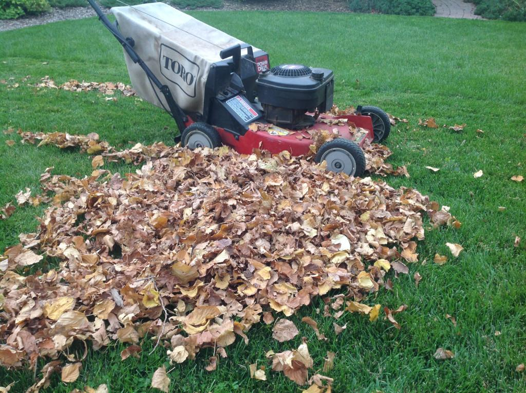 Punch List Fall Tips Preparing Your Garden Trees