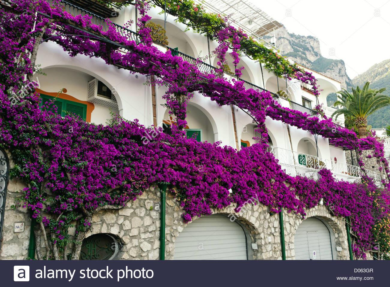 Purple Flower Covered House Facade Hotel Poseidon