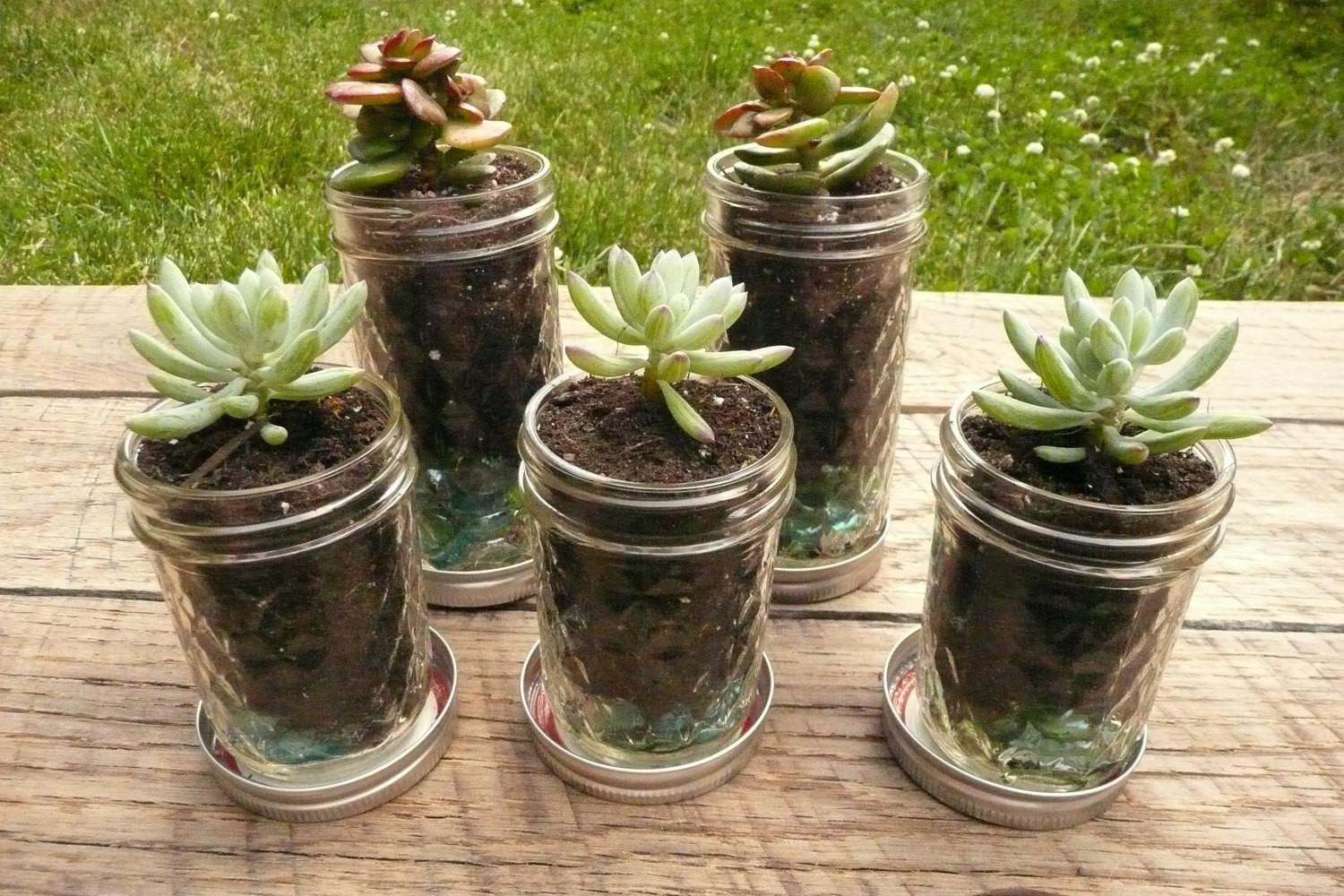 Quilted Mason Jar Succulent Herb Planters