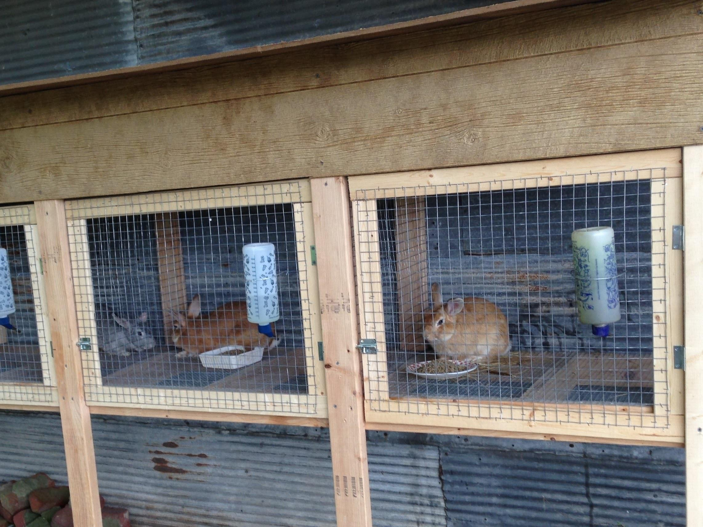 Rabbit Hutches Homemade Wood Wire