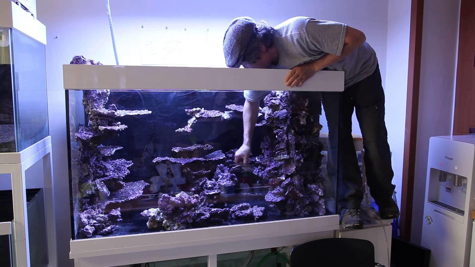 Real Reef Rock Display