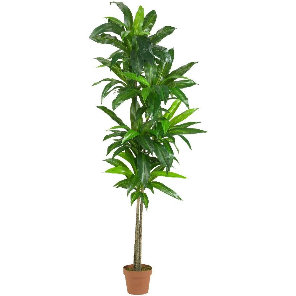 Real Touch Dracaena Silk Plant Artificial Plants