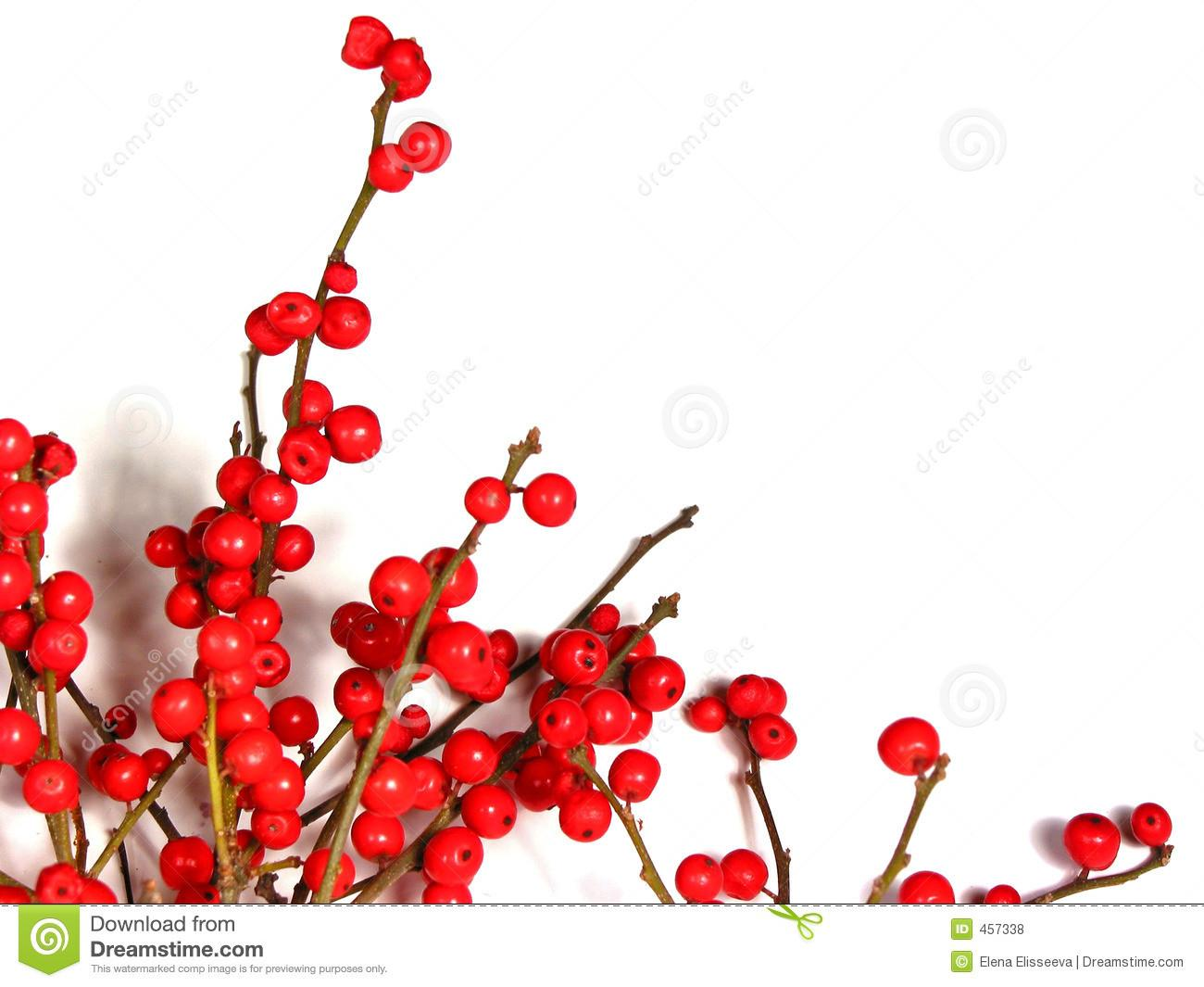 Red Christmas Berries White Royalty Stock Photos