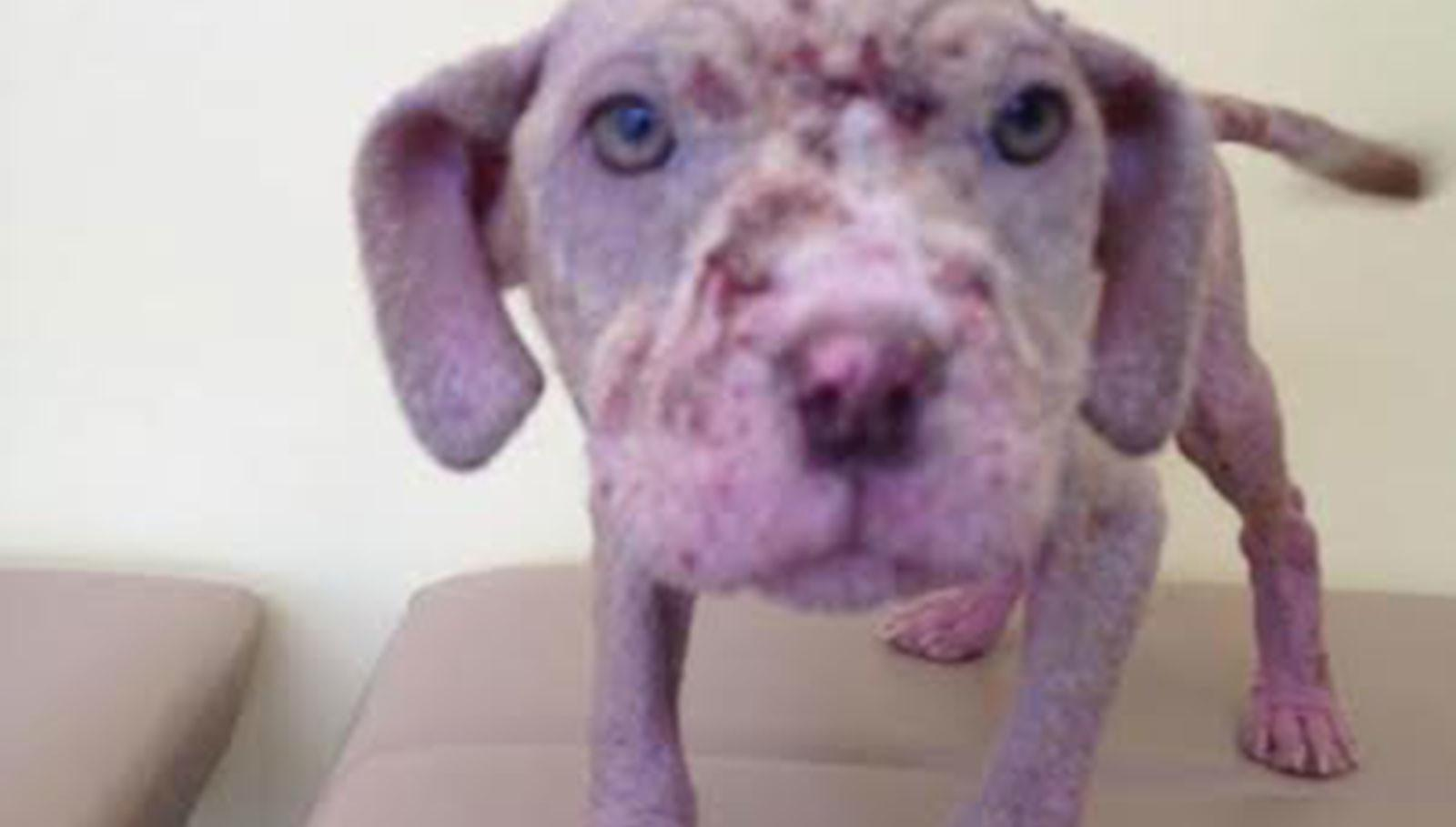 Rescue Pup Dramatic Transformation Leave