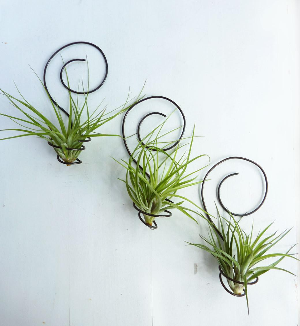 Reserved Shannon0401 Three Wire Air Plant Holders