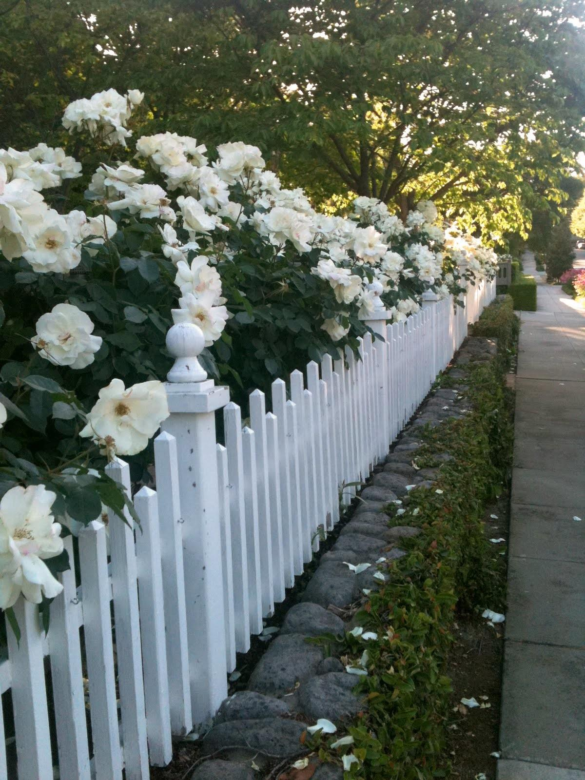 Romantic Home White Picket Fence Love