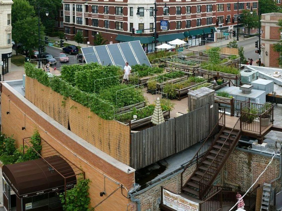 Rooftop Farming Getting Ground Bay Area Bites