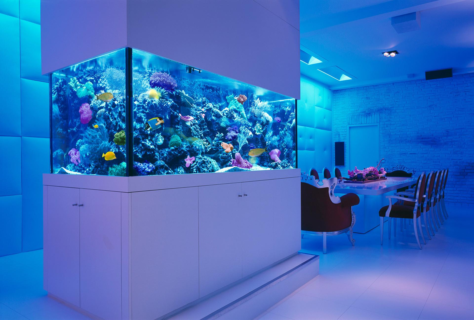 Rooms Stunning Aquariums