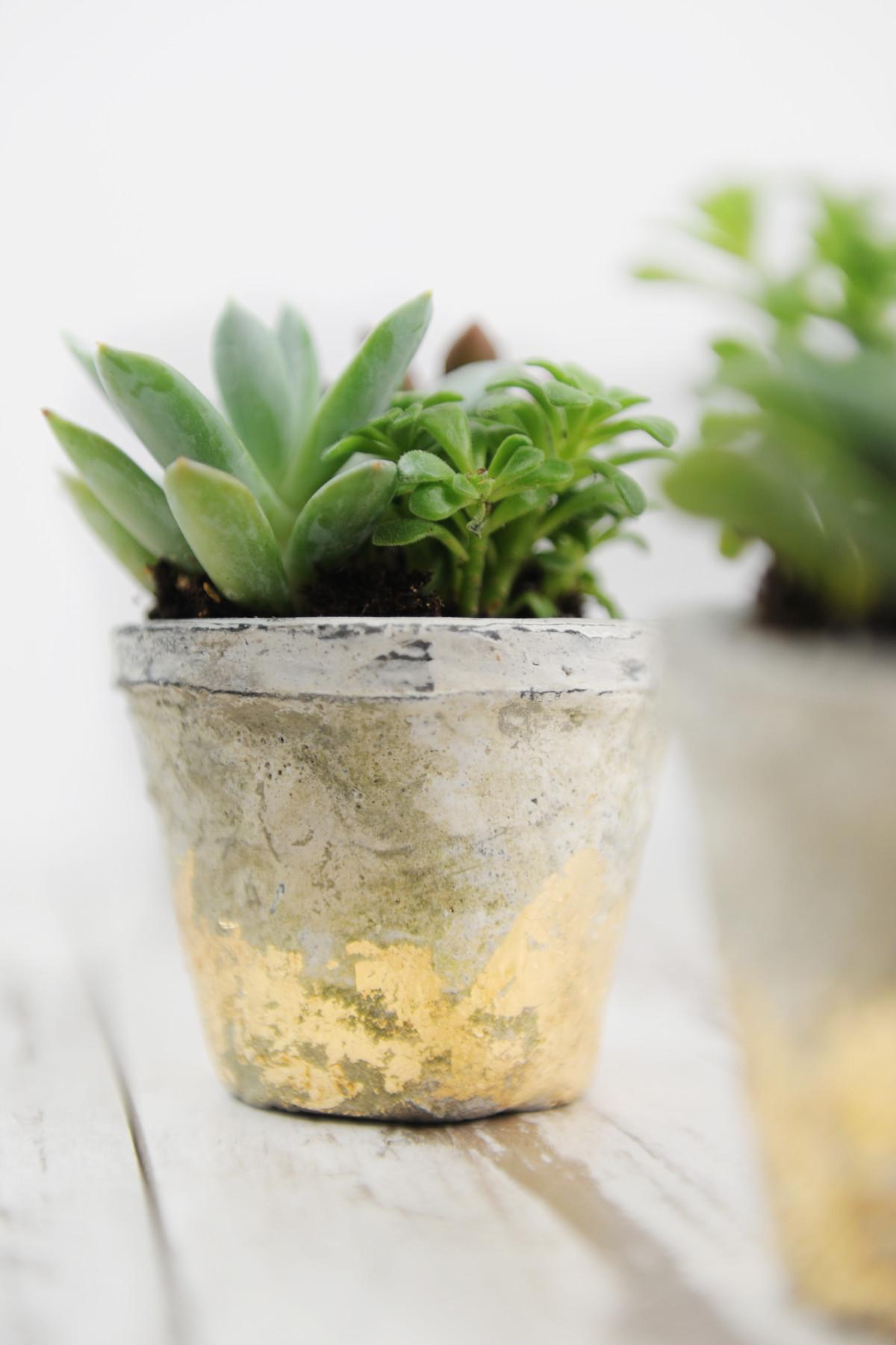 Rustic Gold Leaf Diy Succulent Pots Pink Peppermint Design