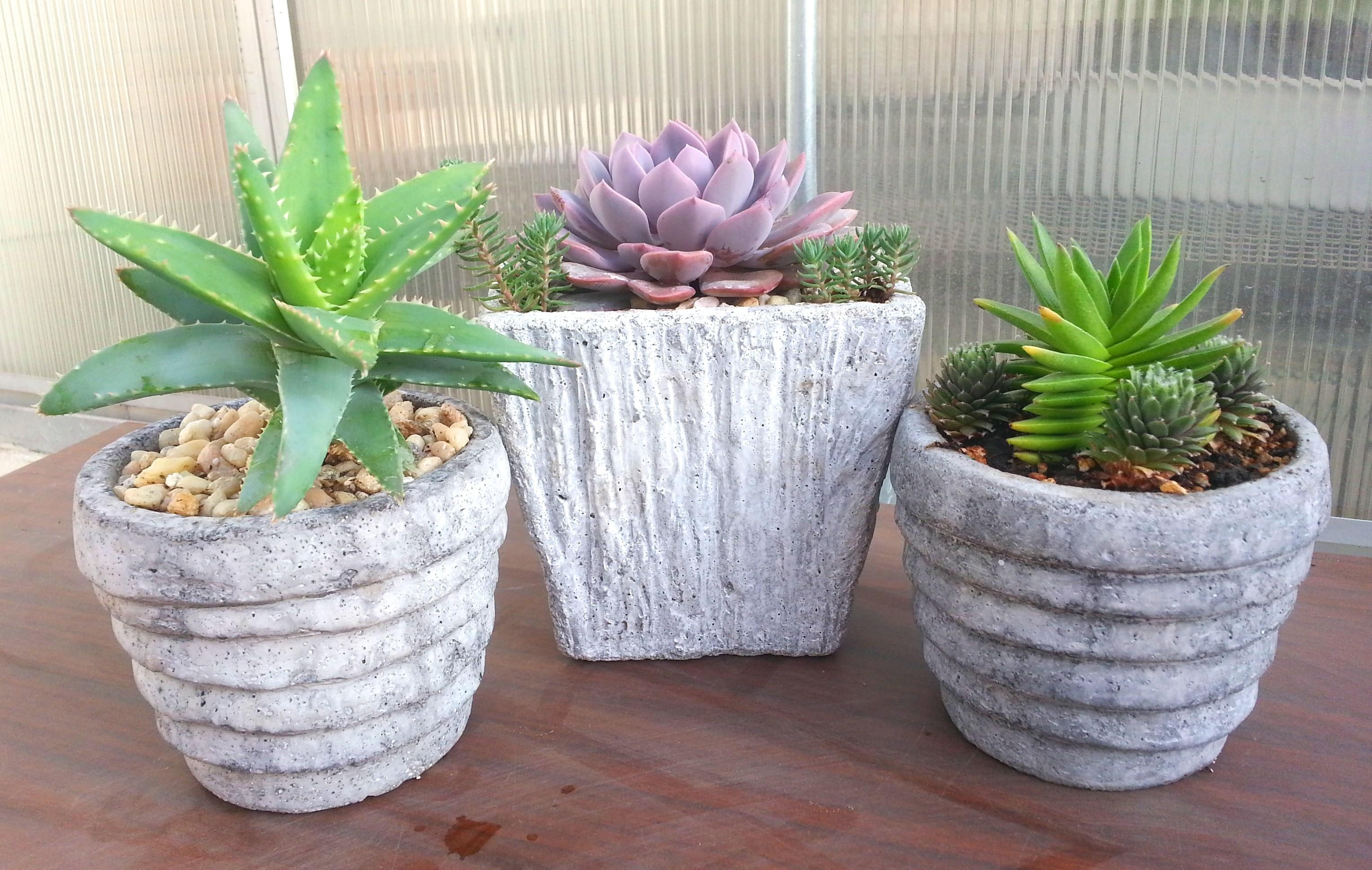 Rustic Succulent Containers Geek Gardens
