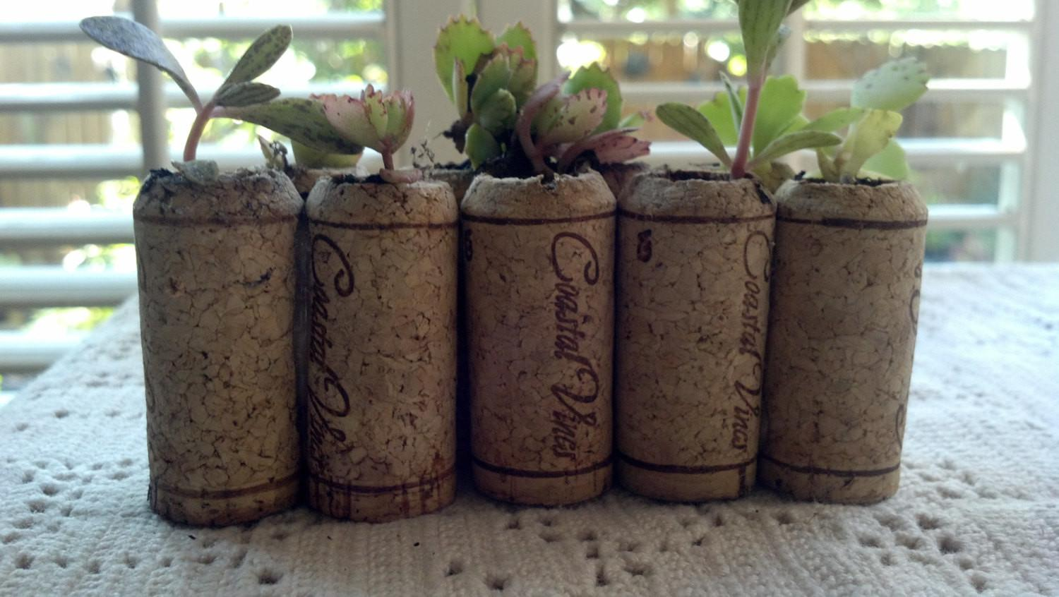 Sale Priced 100 Living Wedding Favors Live Succulent Wine Cork