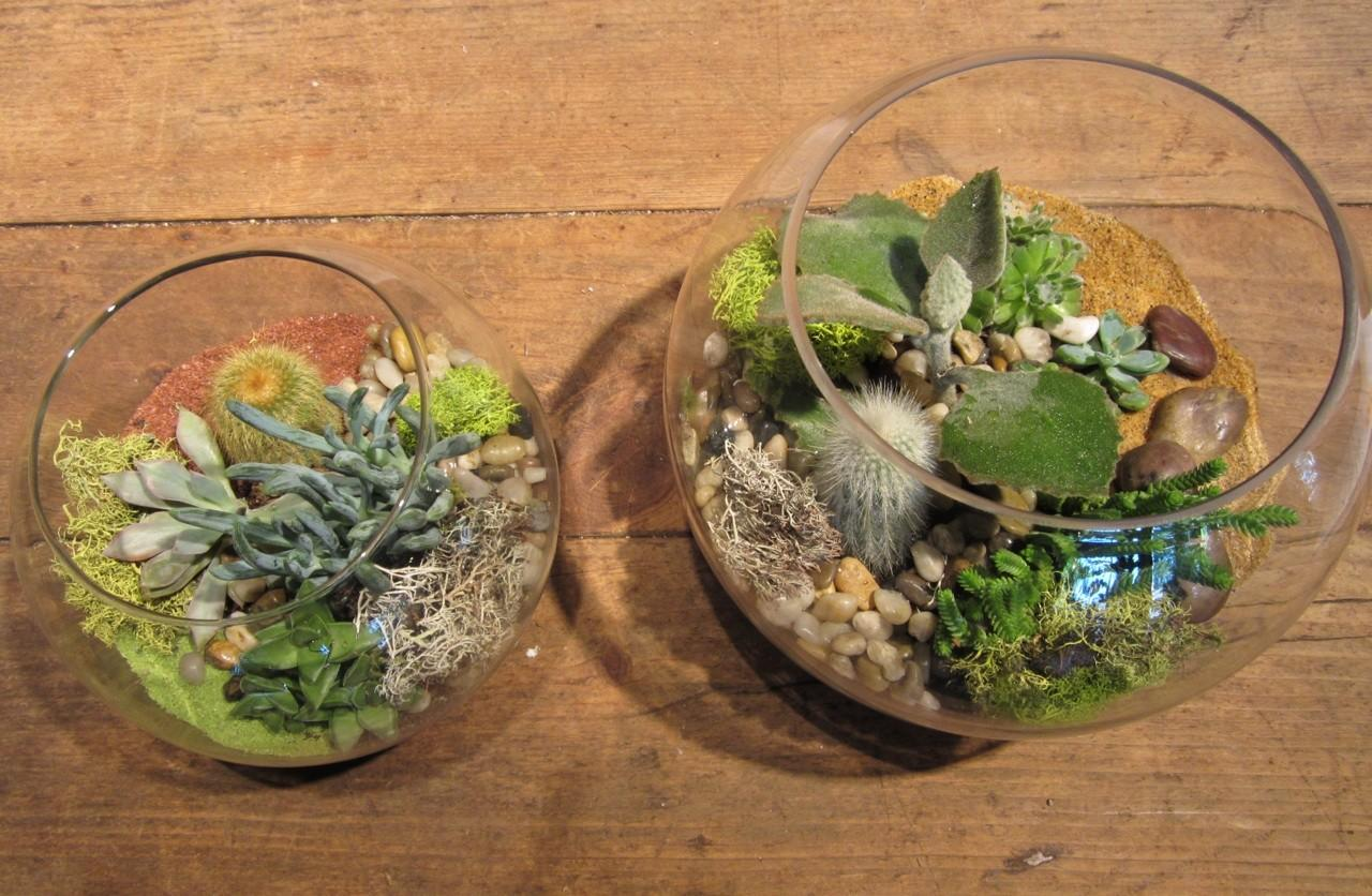 Sammy Flowers Summer Succulent Terrariums