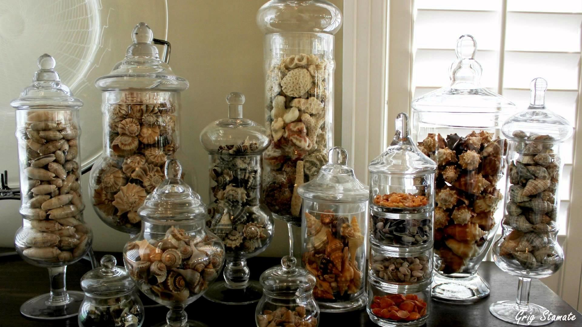 Seashell Display Bring Beach Into Your Home