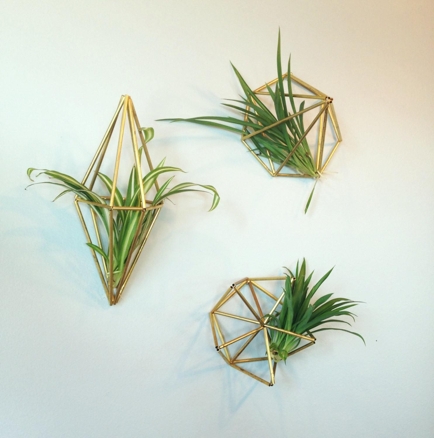 Set Geometric Air Plant Wall Hangers Brass Silver