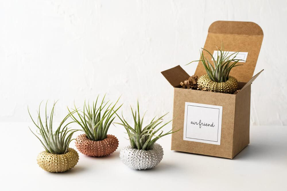 Set Sea Urchin Air Plant Holders Cute Desk Accessories