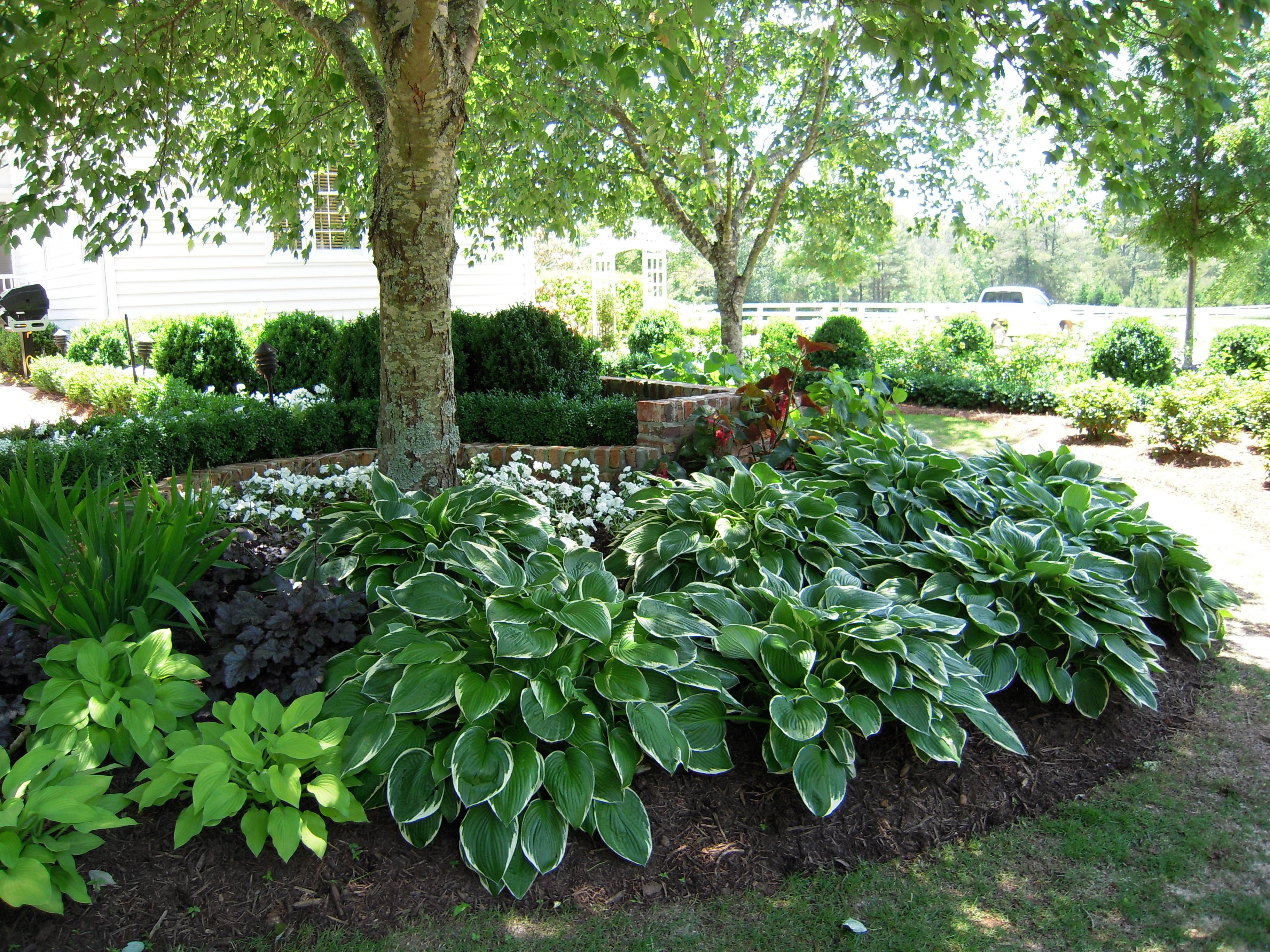 Shade Landscaping Greater Variety Your Garden
