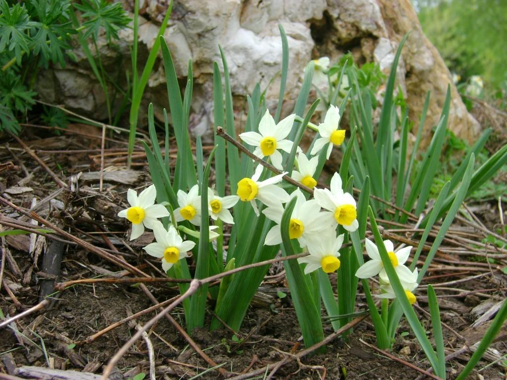Signs Nature Plant Bulbs Spring Avant