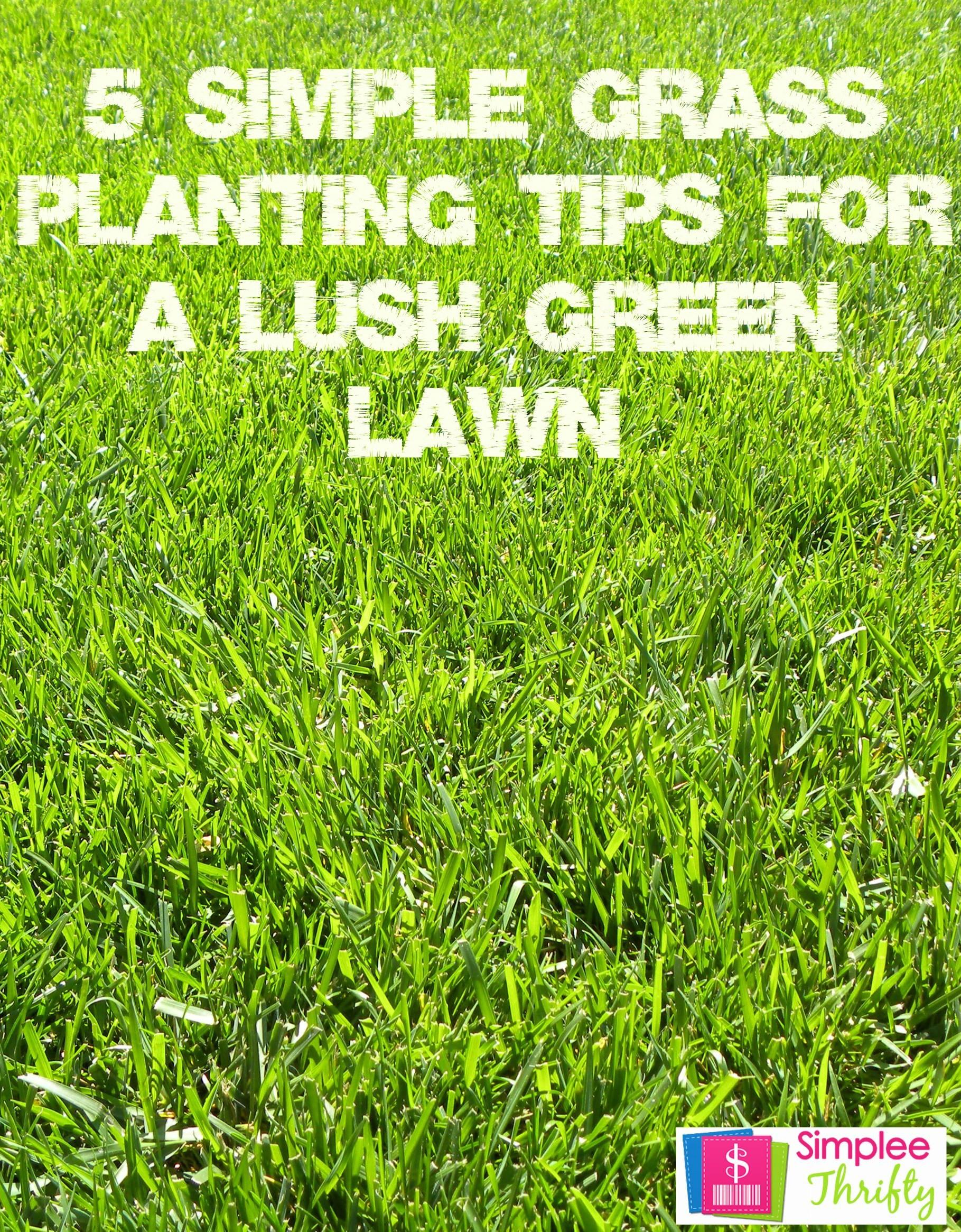Simple Grass Planting Tips Lush Green Lawn