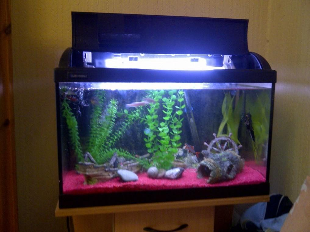 Simple Swuare Modern Fish Tank Design