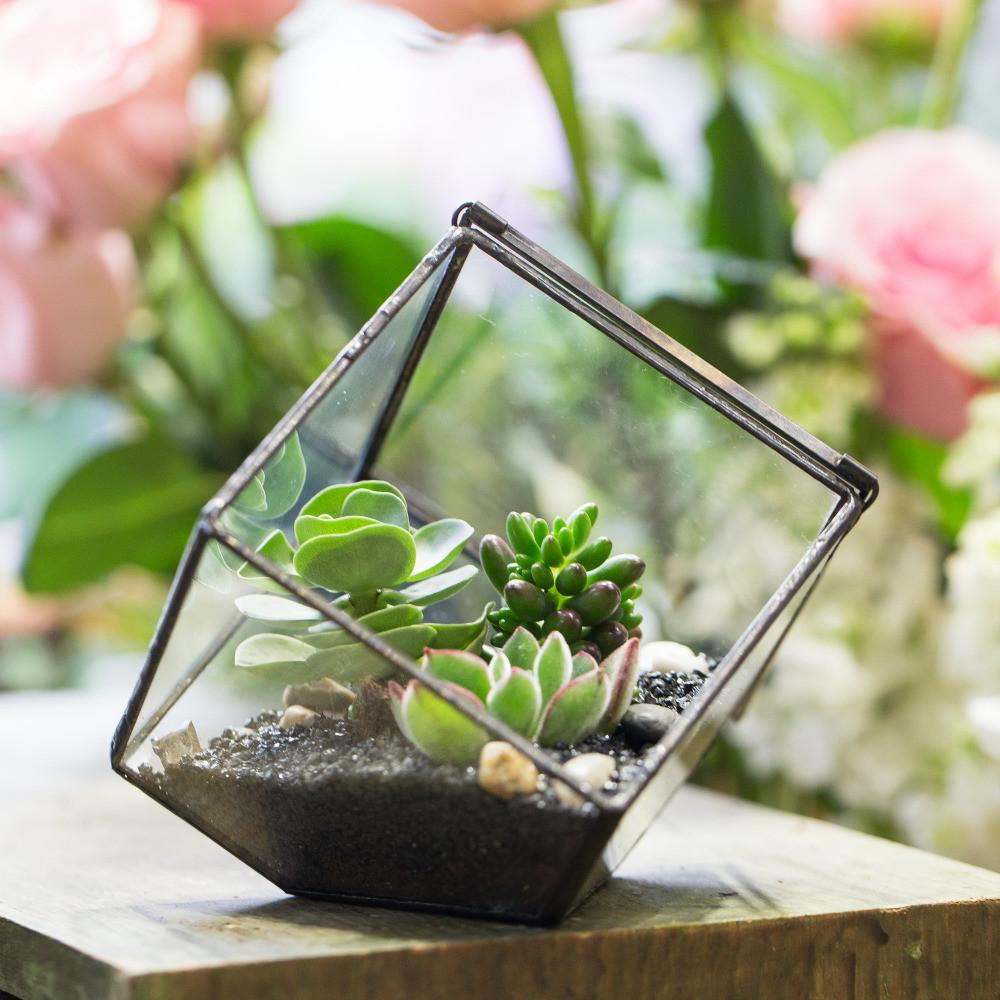 Small Diy Geometric Cube Glass Tabletop Balcony Succulents