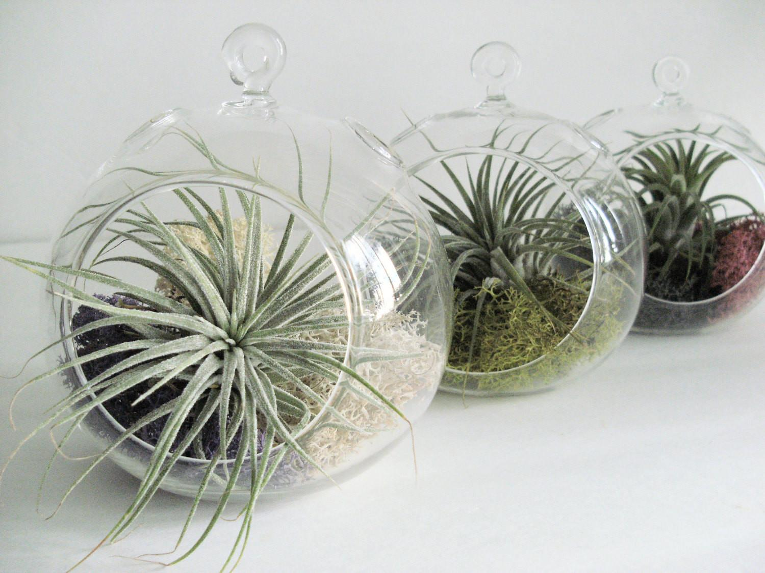 Small Hanging Air Plant Terrarium Your Choice Moss Colors
